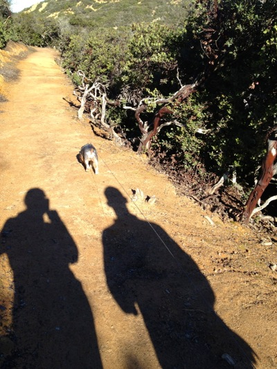 Trail in Pulgas Open Space Preserve