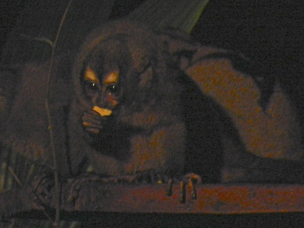monkey_lead