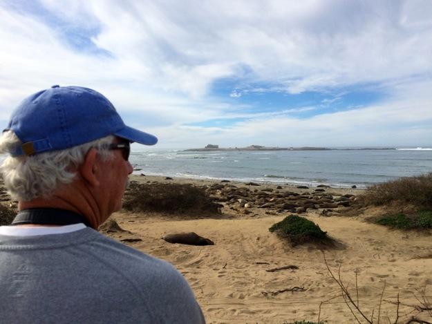 D looking at elephant seals