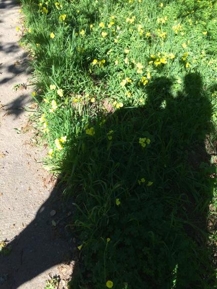 shadowy Sharon walk