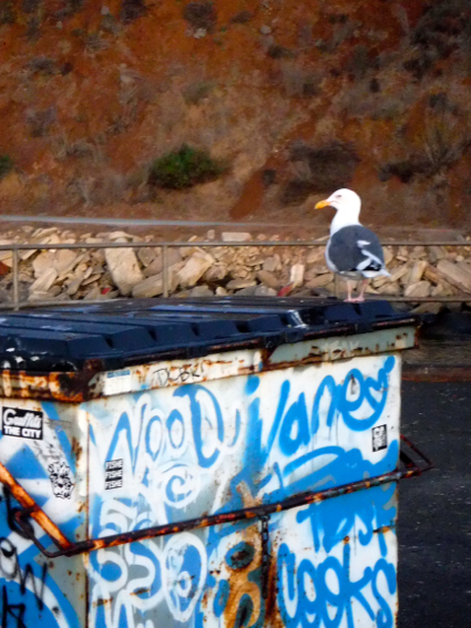 Seagull on dumpster