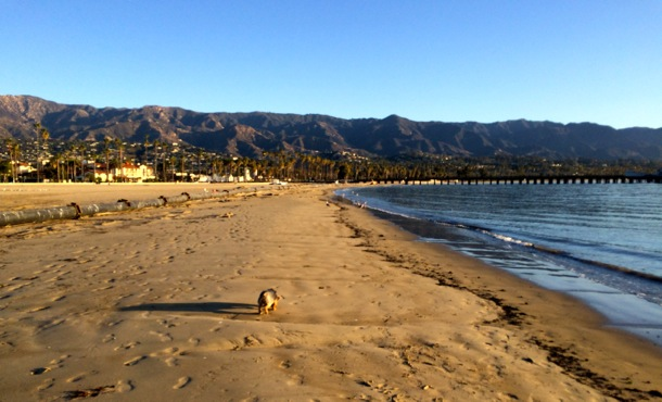 Mag on the beach in Santa Barbara
