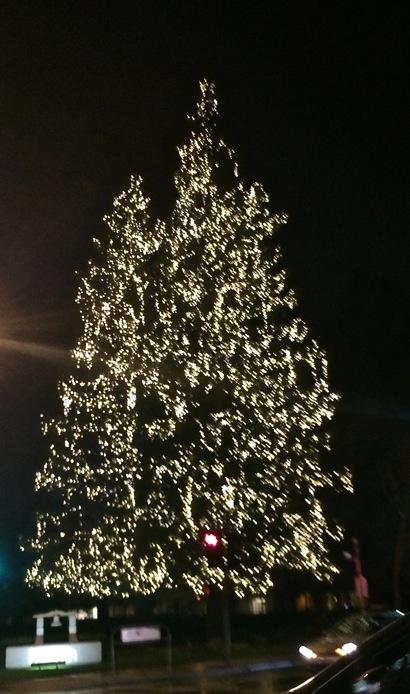 Lighted tree on ECR