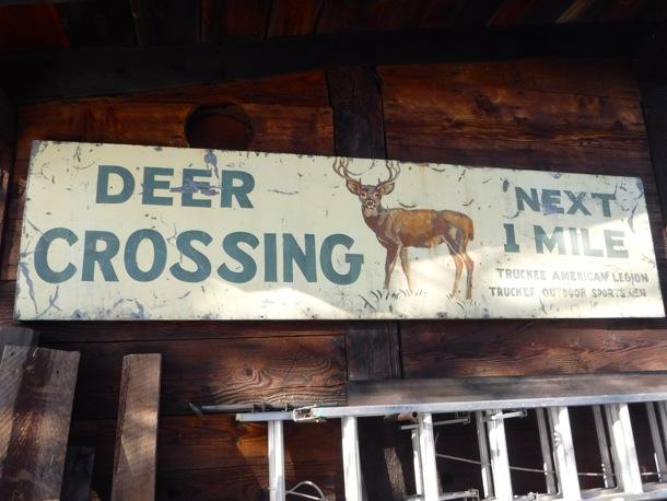 Deer crossing_Truckee