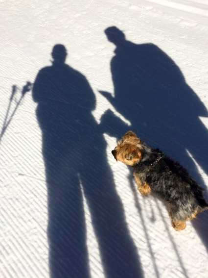 Shadowy at Tahoe XC