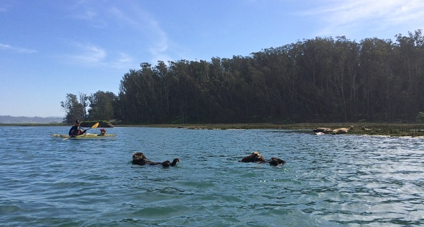 Mag and D paddlingby sea otters