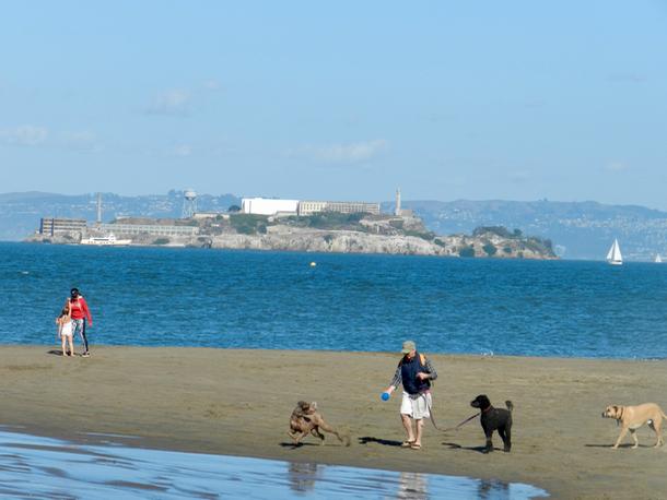 chrissy-field-with-alcatraz-in-background-1