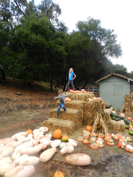 grace-and-james-at-webb-ranch-pumpkin-patch-1-1