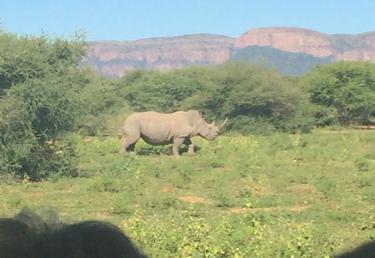 rhino_Marataba_MS_small - 1
