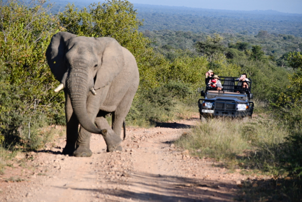 elephant at Marataba_solo_withvehicle_hori - 1