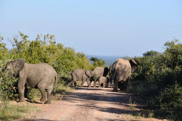 elephants at Marataba_lead_hori - 1