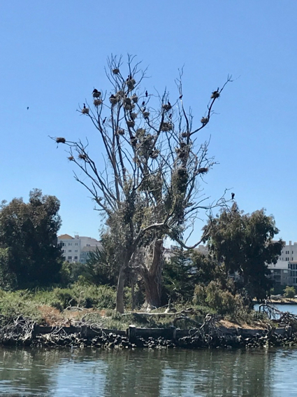 tree filled with bird's nests - 1