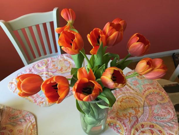 orange tulips - 1
