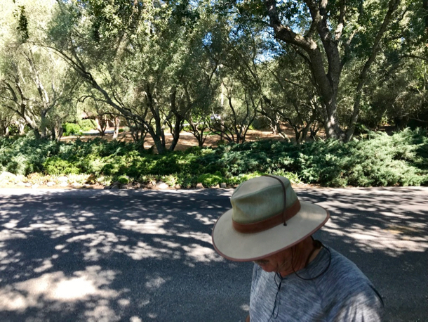 D with olive trees - 1 (1)