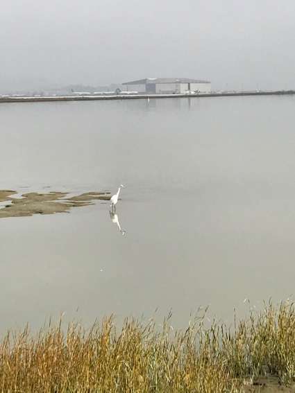 Egret in the Bay - 1