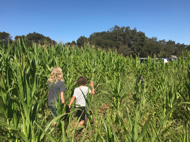 kiddos in corn maze_hori - 1