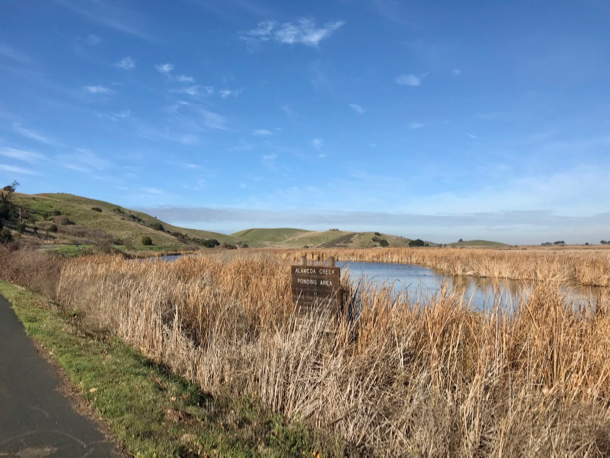 Marshland at Coyote Hills - 1