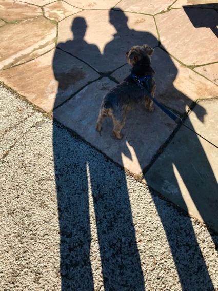 Shadowy at Arastradero - 1